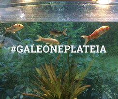 Galeone ενυδρείο για τους μικρούς μας φίλους