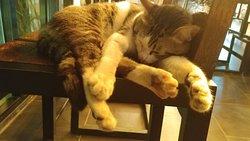 酒店大堂有隻小貓,名叫山竹(Mangoteen),經常出入迎客,很可愛的