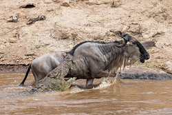 For wildebeests migration, don't hesitate to contact us