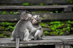 C O N T A C T S Kabale, Uganda 🇺🇬  +256782640777, igeno@igenosafaris.com  Beautiful#uganda #world #china #japan #europe #brazil #africa for #bwindi #trekking #culture #tourism #gorilla #visituganda #birds #birdwatching #birding #primates #nature  #naturephotography #naturelovers visit igenosafaris.com #bunjeejumping #hotairbaloon