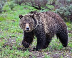 Grizzly Country Wildlife Adventures