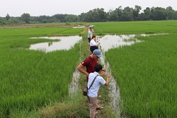 Rice Fields on route to Phu My