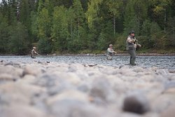 Fly fishing in the Klarälven river