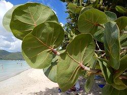alberi dalle grandi foglie sulla spiaggia