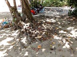 alberi con le radici sulla sabbia a fare ombra