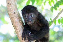 Nosara Refuge for Wildlife
