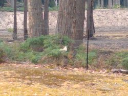 We spotted the white wallaby