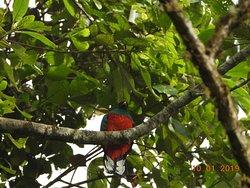 El Dorado Bird Reserve