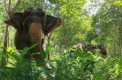 Great Memories Elephants Care Sanctuary Phuket