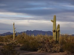 Beautiful cactus and mountains