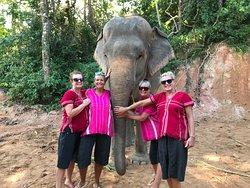 Elephant Family Phuket