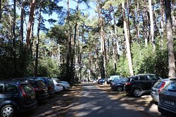 Parking area among the trees