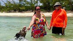 Feeding Swimming Pig