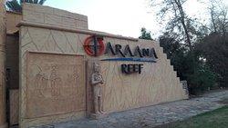 Осень 2018 в Faraana Reef Resort
