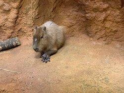 冬季的八木山動物園