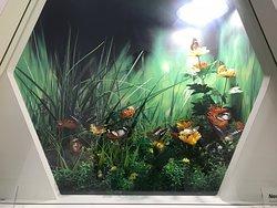 Konya Tropical Butterfly Garden