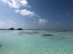 Little Paradise relaxant