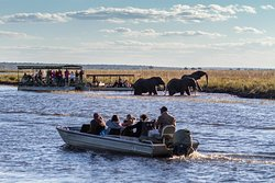 On the River at Chobe National Park, Botswana