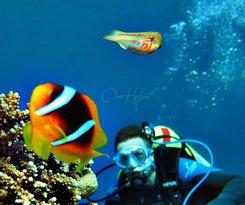 Jordan Frogman Dive Center - Aqaba
