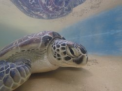 Local Ocean Conservation: Watamu Turtle Watch