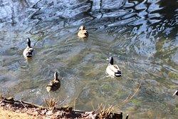 C'est un parc ayant comme thème l'eau - Il y a beaucoup de canards