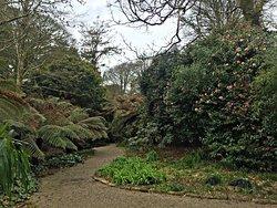Trengwainton Garden path