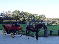 庭園まで行き来する馬車