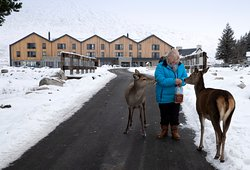 Meet the locals, the famous Kingshouse deer