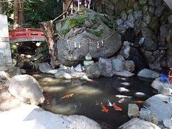 来宮弁財天の横にある池。