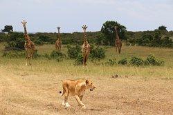 Mara North Conservancy