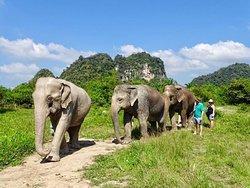 Krabi Elephant Sanctuary