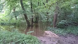 Les arbres les pieds dans l'eau