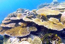 Balabac Coral Reef