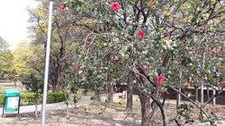 Hibicus Garden