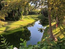 Tropical garden January 30