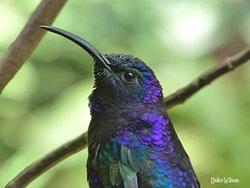 Monteverde Hummingbird Gallery