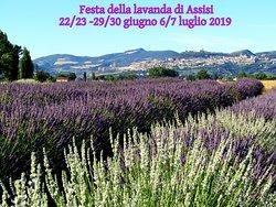 Il Lavandeto di Assisi Nursery