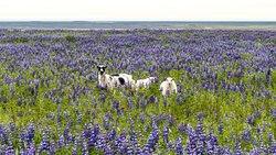 Découvrez l'Islande en été avec www.passion-islande.com... suivez le guide !
