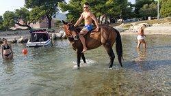 Swimming with horses Kaštela Bay
