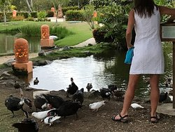 Birds and ducks of the ecological park
