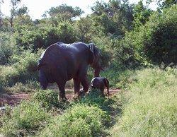Amazing safari from start to finish!!