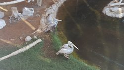 Inside one of the aviaries with pelicans