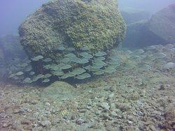 Gran Canaria´s largest Marine Park - Franja Marina de Mogán.  Boat diving trips with Top Diving Gran Canaria.