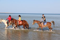 Hurghada Equestrian