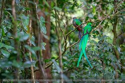 Monteverde Wild Hikes