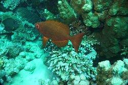 Duiken bij Nemo is prachtig