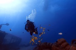 Diving with the Pros at ProDivers Maui