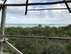 view from lookout tower to mangroves