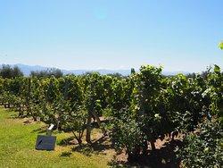 Great bike tour through the vineyards