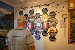 From the hive to the honeypot, find out how Mossops gets our delicious honey from nature to your door.